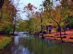Fall colors today at Tannehill State Park... from @objectivityrach