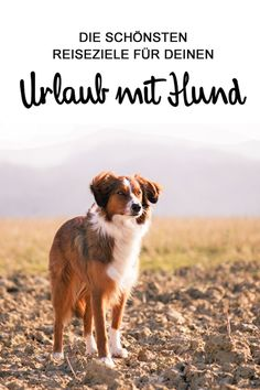 Du willst in den Urlaub, aber dein Kumpel darf nicht fehlen? Hier haben wir die … You want to go on vacation, but your buddy must not miss? Here we have the most beautiful destinations for you and your four-legged friends: www. Animals And Pets, Funny Animals, Funny Dogs, Dog Travel, Happy Dogs, Dog Care, Dog Friends, Dog Training, Pet Dogs