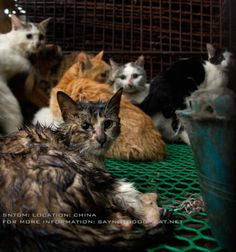 China: Cat Meat Trade Petitions at link. So sickening!