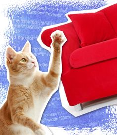 Keep Your Cat from Scratching Furniture