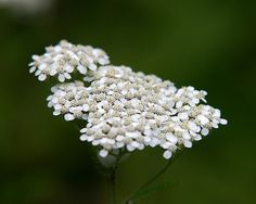 10 useful plants you can find in the wild: Nature for your every need