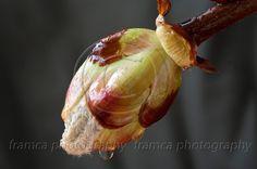Autumn chestnut2  framcaphotography.com