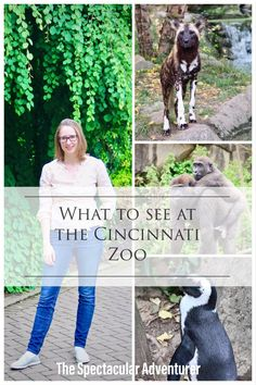 The Ultimate Cincinnati, OH Zoo Travel Guide . including what to see & how to get to the zoo . Between the various exhibits and shows the zoo is the perfect way to spend a day Travel Itinerary Template, Cincinnati Zoo, Surfing Pictures, Venice Travel, Bainbridge Island, Family Vacation Destinations, Vintage Travel Posters, Buy Tickets