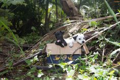 Hundreds Of Unwanted Pets Have Been Dumped On 'Dead Dog Beach'  9/5/2015 Purto Rico