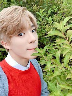 "181009 ""It's been a while Seasonies. Nct 127, Jeno Nct, Winwin, Taeyong, Jaehyun, Nct Dream, K Pop, Meme Photo, Wattpad"