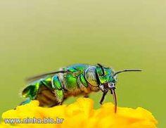 estranha abelha verde