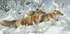 """""""Side By Side"""" - x """"Side By Side"""" - Canine Wild Canine Paintings Wolf and Fox Artwork Wildlife Paintings, Wildlife Art, Jackson Pollock, Fox Dog, Red Fox, Outdoor Art, Illustration Art, Illustrations, Wolf"""