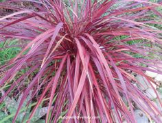 Design with Diversity Water Wise, Winter Colors, Plant Design, Drought Tolerant, Sunrise, Fall Winter, Gardens, Herbs, Plants