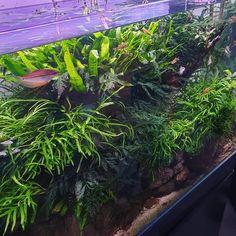 Nature Aquarium, Layout Inspiration, Top View, Fish, Content, Plants, Instagram, Design Inspiration, Pisces