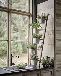 Oltre 1000 idee su vasi da giardino su pinterest - La finestra sul giardino ...