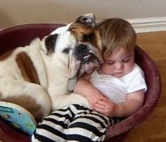 dog and baby  I love English Bulldogs, some day I might be able to add one to the family!