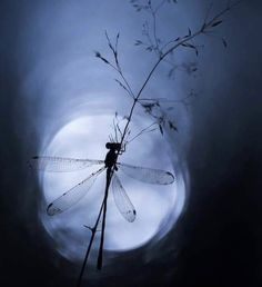 Nice to meet you. But Is It Art, Dragonfly Art, Nice To Meet, Blue Moon, Tumblr Posts, Videos, Folk Art, Dandelion, Photo And Video
