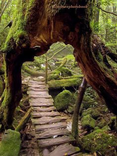 Primeval Forest, Shiratani Unsuikyo Ravine, Japan