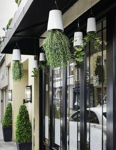 Boskke at Daphne's @Brompton Design District