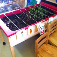 This class is using the sand box to grow vegetables. I love how they are using student created labels to id plants.