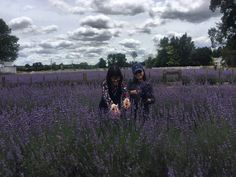 Our overseas customers from Thailand came to enjoy their first pick Your Own Lavender.😀  Pyo lavender is now open 7 days a week✂️ Pyo blueberries is still on.😉  www.lavenderbackyard.co.nz  #pickyourown #pyo #lavender #fun #aroma #travel #family #trip #roadtrip
