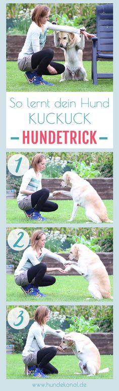 Einfache Hundetricks | Anleitung Hund Kuckuck beibringen