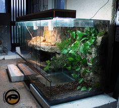 Boa Constrictor habitat – 1800x750x900mm (6×2.5x3ft) 2