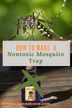 This is a great homemade mosquito trap. DIY with common household materials including a bottle and yeast. Can use it indoor or outdoor. #science #insects #mosquitoes #diymosquitotrap