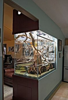 An aquarium is an enclosure with at least one clear side that houses water-dwelling fish, plants and other livestock and decorations. An aquarium offers a place for fish and plant life including corals and reefs to live in a contained Aquariums Super, Amazing Aquariums, Aquarium Design, Freshwater Aquarium, Aquarium Fish, Aquarium In Wall, Aquarium Setup, Aquarium Original, Conception Aquarium