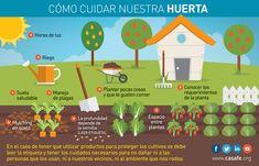 Buenas prácticas agrícolas en tu Jardín y en tu Huerta | Casafe Plantar, Cilantro, Best Practice, Irrigation, Vegetable Garden, Organize
