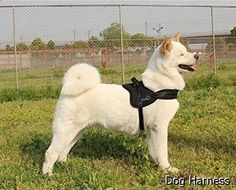 Dog Harness - large choice. Must visit...