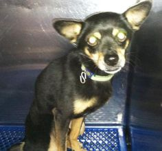 35565090 Current status is unknown  Read more at http://www.dogsindanger.com/dog/1496783116775#jHSLB8EZBFMLSsC6.99 located in El Paso, TX was euthanized on Jul 6, 2017!