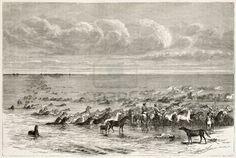 """Chevaux au gué du fleuve Volga, vieille illustration. Créé par Moynet, publié sur Le """"Tour du Monde"""", Paris, 1867"""