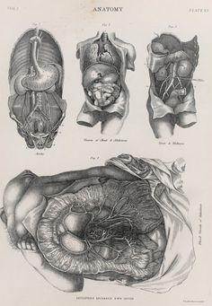 anatomy oddities curiosities gothic vintage diagram organs anatomical science victorian renaissance Corset Disfiguration Coasters set 4