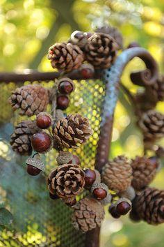 <3 pinecone acorn wreath <3