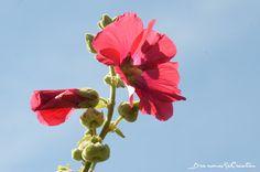Maman Baobab: [Vacances en Bretagne] Cancale, Pointe du Grouin, ...