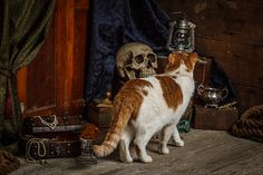 Daily Dose - March 24, 2015 - Cat on a Pirate Ship 2015@Barbara O'Brien Photography