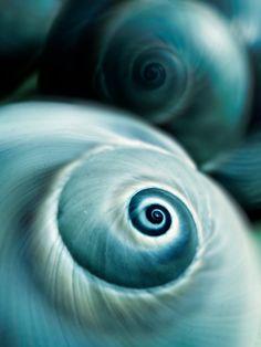 Nature Photography, Shells, Aqua, Beach, Fine Art Print, Home Decor