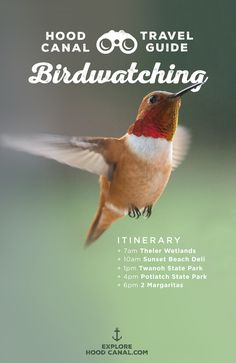 Spot a lifebird in Hood Canal! Get the perfect birdwatching itinerary on our blog.
