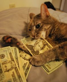 I love cats and money