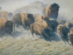 Daniel Smith - Thunder and Dust - MASTERWORK CANVAS EDITION from the Greenwich Workshop Fine Art Gallery featuring fine art prints, canvases, books, porcelains and gift ideas. Wildlife Paintings, Wildlife Art, Animal Paintings, American Bison, American Indian Art, Daniel Smith Art, Buffalo Painting, Animal Painter, Workshop