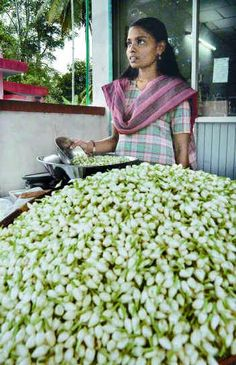 jasmine flower harvest...they sell many sashes of fresh Jasmine in grocery stores all over UAE. Wish I had some now:(