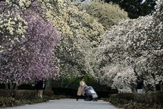 Brooklyn Botanical Gardens Great Place For A Wedding New York City 39 S 5 Boroughs