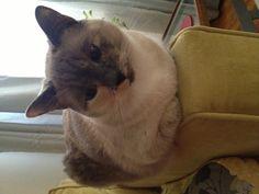 Cat loaf