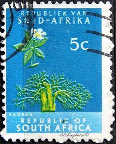 Republic of South Africa.  BAOBAB TREE.  Scott 260 A114, Issued 1961 May 31, Photo., Wmk 330, 14 x 15, 20. /ldb.