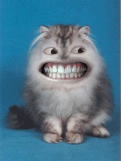 Perfect Smile -  From: http://welovecatsanddogs.blogspot.com