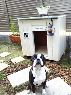 Solar powered light on dog house Dog House Bed, Dog Eyes, Dogs Of The World, Dog Houses, Dog Supplies, Dog Life, Fur Babies, Dog Lovers, Puppies