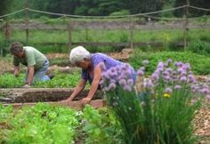For $40 a year, members of the West Milford Community Garden on Union Valley Road get to run their hands through their own small patch of moist earth. Nature does the rest.    Each small plot yields enough produce to feed a family of four for a year, organizers said. Anything that's left over is donated to the local food pantry, Ample Harvest, to be distributed to needy families.
