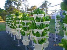 vertical hydroponic farming - growing romaine without soil, manure or chemicals and using a fraction of the space #hydroponics #verticalfarming