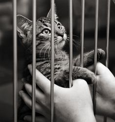 With so many humans giving of their time to rescues, companion animals will begin getting adopted in record numbers. The shelters will need fewer volunteers, and we people can go back to finding other ways to keep grounded and sane.