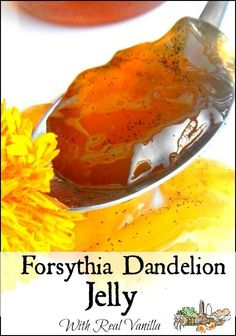 Forsythia Dandelion Jelly with Real Vanilla l Edible Flowers l Homestead Lady.com