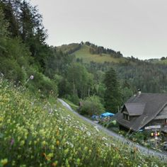 Zu Tisch: Zürich - Bergrestaurant Sennhütte - Der Fussweg in die Strahlegg, einer Aussenwacht der Gemeinde Fischenthal, windet sich vom Tösstal durch steile Weiden und tiefgrüne Wälder, zum Bergrestaurant Sennhütte auf 1'000 Meter über dem Meeresspiegel. Von der liebevoll gestalteten Sonnenterrasse der Familie Peter hat man dort, bei einem Glas Most einen traumhaften Ausblick auf die sagenumwobene, grüne Hügellandschaft. Switzerland, Florida, Travel, Wicker, Communities Unit, Swiss Guard, Viajes, The Florida, Trips