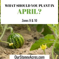 April Planting Guide - Zones 5 & 6 - Our Stoney Acres Growing Green Beans, Tips For Growing Tomatoes, Growing Vegetables, Building A Raised Garden, Raised Garden Beds, Raised Gardens, Growing Shallots, Canned Pickled Beets, Everbearing Strawberries