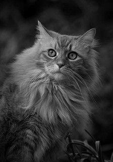 BEAUTY #cat