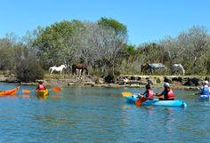 L'Espace éco-pagayeur vous accueille à la base nautique intercommunale du #Vidourle au #Grau du Roi. C'est une nouvelle activité, unique dans le #Sud de la #France : un #parcours d'interprétation en #canoë-kayak ou stand up #paddle, #ludique et pédagogique, qui allie découverte de la #nature, notions d'orientation et pratique sportive.. Idéal pour une sortie en #famille ! Plus d'infos : http://www.tourismegard.com/accueil/bouger/espace-eco-pagayeur-terre-de-camargue